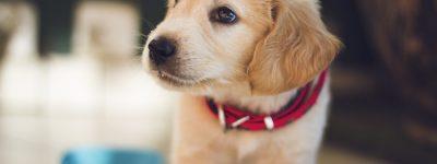 pet health insurance Pittston PA